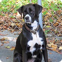 Adopt A Pet :: Sadie - Russellville, KY