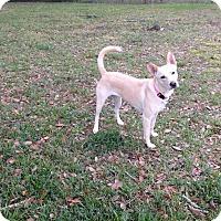 Adopt A Pet :: Lucy (fostered in FL) - Cranston, RI