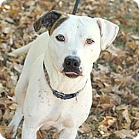 Pit Bull Terrier Mix Dog for adoption in E. Greenwhich, Rhode Island - Isabella