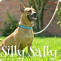 Adopt A Pet :: Silly Sally - Houston, TX
