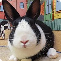 Adopt A Pet :: Wallace - Foster, RI