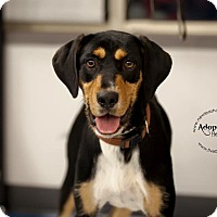 Adopt A Pet :: Mayzee - La Crosse, WI