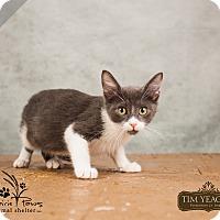 Adopt A Pet :: Jinx - Ottawa, KS
