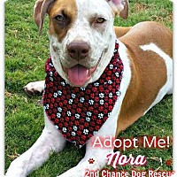 Adopt A Pet :: Nora - Queen Creek, AZ
