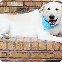 Adopt A Pet :: Benny - Benbrook, TX