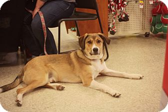 Collie Mix Puppy for adoption in Thorp, Wisconsin - Lucky-Adoption Pending