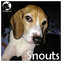 Adopt A Pet :: Snouts - Pittsburgh, PA
