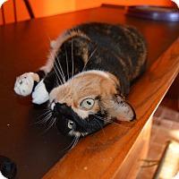 Adopt A Pet :: Rosie - Richmond, VA