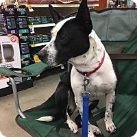 Adopt A Pet :: Roseanne - Jackson, TN