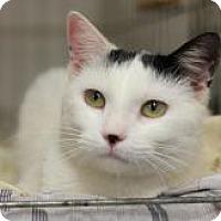 Adopt A Pet :: KR 4 Black and White boy - Yukon, OK