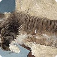 Adopt A Pet :: Nick Fury - Ennis, TX
