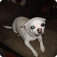 Adopt A Pet :: Trixie - Leesport, PA