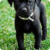 Adopt A Pet :: MIA - Torrance, CA