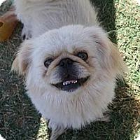 Adopt A Pet :: Buddy - Tyler, TX