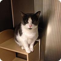 Adopt A Pet :: Oliver - Muncie, IN