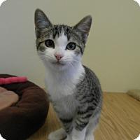 Adopt A Pet :: Maycee - Milwaukee, WI