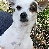 Adopt A Pet :: Tula - Gainesville, FL