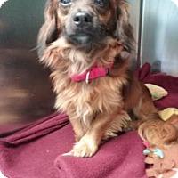 Adopt A Pet :: Tremolo - Bradenton, FL
