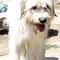 Adopt A Pet :: Bettina - Woonsocket, RI