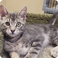 Adopt A Pet :: Luna - Grants Pass, OR