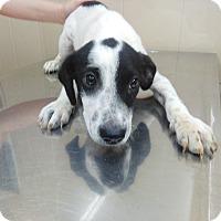 Adopt A Pet :: Duncan - Albany, NY