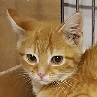 Adopt A Pet :: GARFIELD! - Owenboro, KY