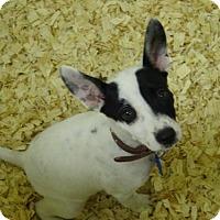 Adopt A Pet :: Jenny - Cherry Hill, NJ