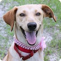 Adopt A Pet :: Rafiki - Loxahatchee, FL
