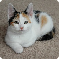 Adopt A Pet :: Giselle - Austintown, OH
