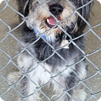 Adopt A Pet :: Zevely - Encinitas, CA