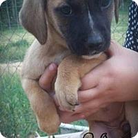 Adopt A Pet :: Aurora - Denver, CO