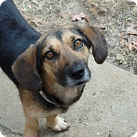 Adopt A Pet :: Lucille - Allentown, PA