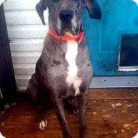 Adopt A Pet :: Samson - Austin, TX