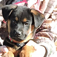 Adopt A Pet :: Apollo - Berkeley Heights, NJ