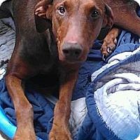 Adopt A Pet :: Mama - Alamosa, CO