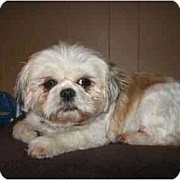 Adopt A Pet :: Daisy - Dayton, OH