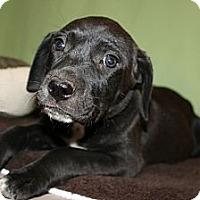 Adopt A Pet :: *J.R. - PENDING - Westport, CT