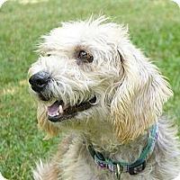 Adopt A Pet :: Ian - Mocksville, NC