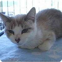 Adopt A Pet :: Mocha - San Ramon, CA