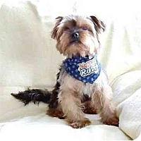 Adopt A Pet :: Bentley - Mooy, AL