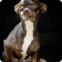 Adopt A Pet :: Sebastian - Albany, NY