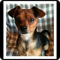 Adopt A Pet :: SKIP - Winchester, CA