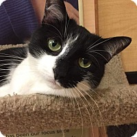 Adopt A Pet :: Tiger Lilly - Tega Cay, SC