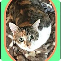 Adopt A Pet :: Kiki - Milton, GA