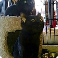 Adopt A Pet :: Sassy - Horsham, PA