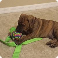 Adopt A Pet :: Jinxx - Windermere, FL
