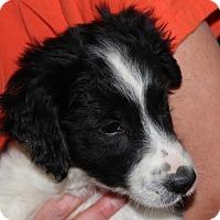 Adopt A Pet :: Gene Autry - Harmony, Glocester, RI