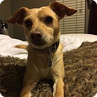 Adopt A Pet :: Jackson - San Francisco, CA