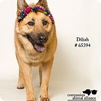Adopt A Pet :: Delilah - Baton Rouge, LA