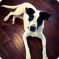 Adopt A Pet :: Molly Mae - New Oxford, PA